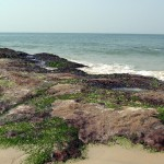 Someshwara-beach-Ullal5